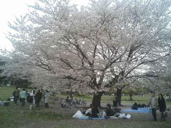 光が丘公園花見2.jpg