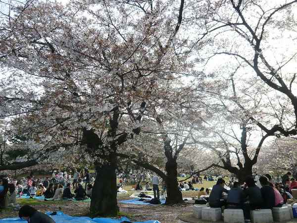 08年4月光が丘公園花見3.jpg