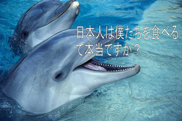 イルカ~2.jpg