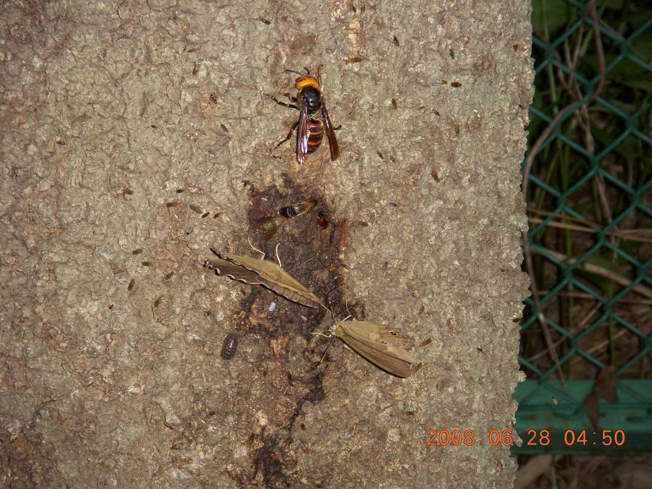 蝶とハチ2