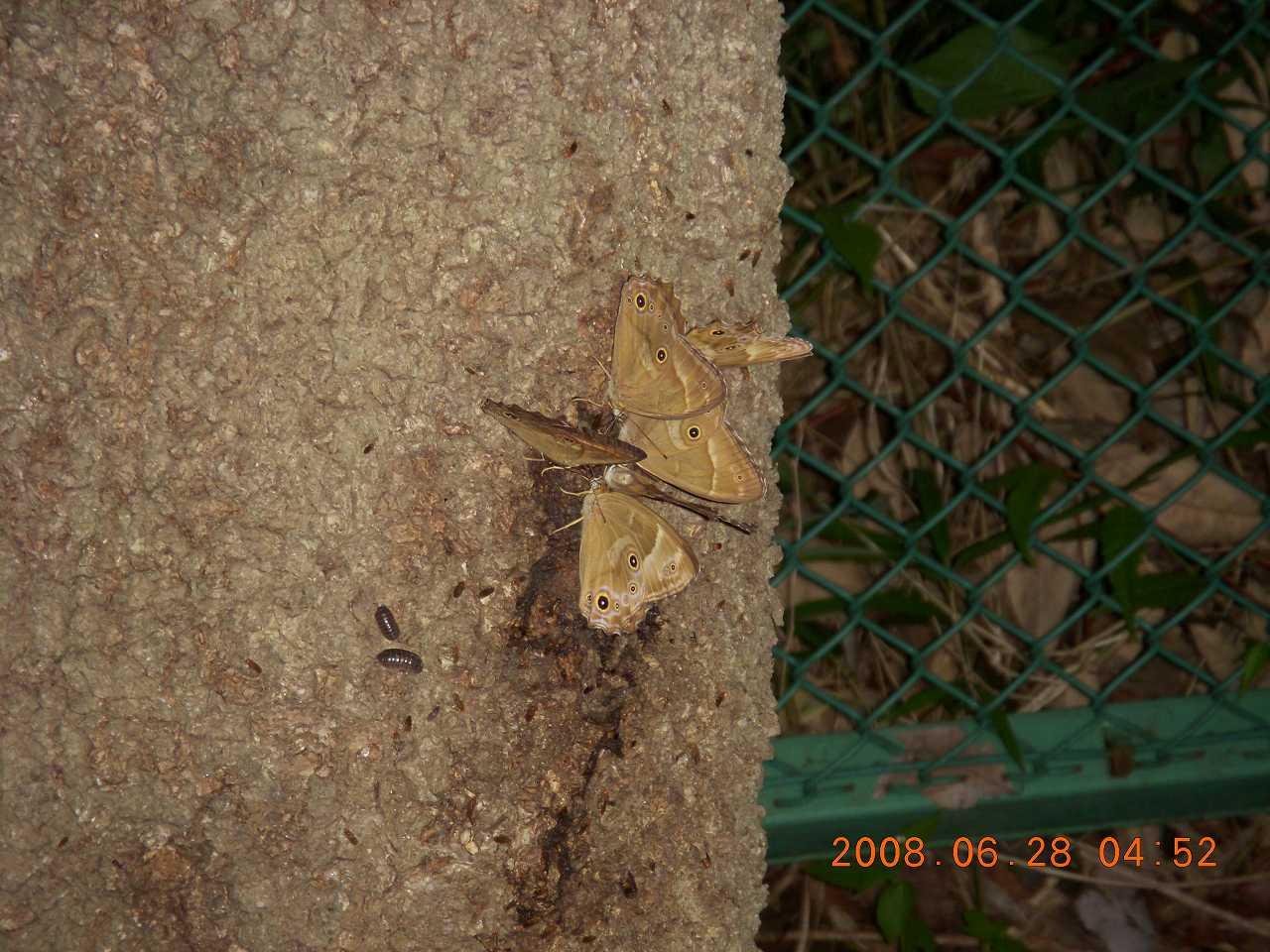 蝶とハチが飛んでいった3
